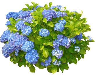 haveplanter-img