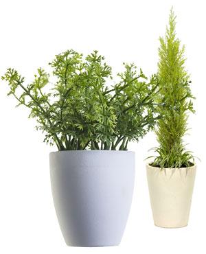 stueplanter-img